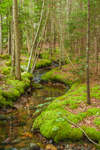 Small Stream Flowing Through Moss-covered Spruce and Fir Forest, Acadia National Park, Mount Desert Island, Mount Desert, ME