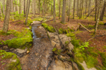 Tributary of Hunters Brook Flowing through Spruce/Fir Forest, Acadia National Park, Mount Desert, ME