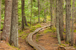 Wooden Boardwalk on Hunters Beach Trail, Acadia National Park, Mount Desert, ME