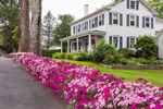 Colorful Flower Garden in Front of Colonial-style Home, Village of Somesville, Mount Desert, ME