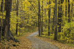 Country Road Winding through Fall Foliage in Forest along Housatonic River, Kent, CT
