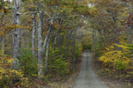 Country Road through Fall Foliage in Pachaug State Forest, Griswold, CT