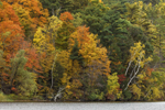 Colorful Fall Foliage in Trees along Shoreline of Washinee Lake, Salisbury, CT