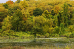 Colorful Fall Foliage in Woodlands along Shoreline of Beardsley Lake, Sharon, CT