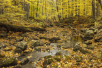 Macedonia Brook in Fall, Macedonia Brook State Park, Kent, CT