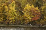 Colorful Fall Foliage in Woodlands along Shoreline of Hilltop Pond near Macedonia Brook State Park, Kent, CT