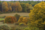 Fall Foliage in Rural Farmlands, Brooklyn, CT