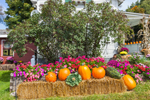 Decorative Pumpkin Harvest Display at Stowe Maple Products, Stowe, VT