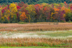 Freshwater Marsh and Forest in Fall, near Pleasant Brook, Sudbury, VT
