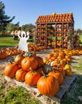 Pumpkin Stand at Lester Farm, New Haven, VT