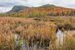 Cattail Marsh Wetlands and Colorful Fall Foliage on Moxham Mountain, Adirondack Park, Minerva, NY