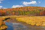 Marshes, Forests, and Tributary of Saranac River in Fall, near Saranac Lake, Adirondack Park, St. Armand, NY