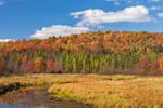 Marshes, Forests, and Tributary of Saranac River in Fall, near Saranac Lake, Adirondack Park, St. Armand, NY