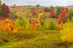 Colorful Fall Foliage in Fields on Birch Hill, Taconic Trail, Taconic Trail State Park, Williamstown, MA