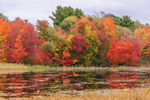 Colorful Fall Foliage Reflecting in Templeton Pond, Templeton, MA