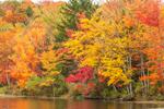 Fall Foliage along Shoreline of Mill Pond, Grafton Lakes State Park, Grafton, NY