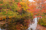 Colorful Fall Foliage Reflecting in Long Pond on Tully River, Royalston, MA