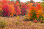 Wetlands and Forests with Brilliant Fall Foliage, Taconic Mountains Region, Petersburg, NY