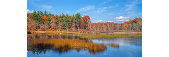 Marshes and Woodlands along Upper Roaring Brook in Fall, Arcadia Wildlife Management Area and Browning Mill Pond Recreation Area, Exeter, RI