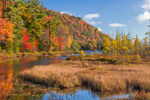 Wetlands in Fall at Oxbow Lake Outlet, Adirondack Park near Piseco, Arietta, NY