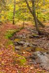 Tributary of Willowemoc Creek in Early Fall, Catskill Mountains, Catskill Park near Livingston Manor, Rockland, NY