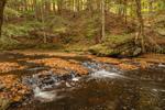 Fir Brook in Fall, Tributary of Willowemoc Creek, Catskill Mountains, Catskill Park, Neversink, NY
