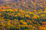 Catskill Mountains Hillside Ablaze with Fall Colors, Catskill Park near Hamlet of Arkville, Middletown, NY