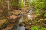 Quaker Run in Mixed Hemlock and Hardwood Forest, Allegany State Park, Elko, near Salamanca, NY