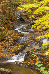 Small Waterfall on Beaver Meadow Brook in Autumn, Leyden, MA