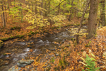 Shattuck Brook in Autumn, Bernardston, MA