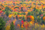 Hillside of Fall Foliage and Evergreen Trees, Newport, NH