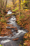 Tributary of East Branch of Swift River in Fall, near Brooks Woodlands Preserve, Petersham, MA