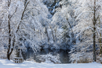 Backlit Snow-covered Trees along Banks of Millers River, Orange, MA