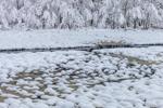 Snow-covered Marsh along Beaver Brook after Heavy Snowfall, Phillipston, MA