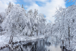 Tully River under Clearing Skies after Heavy Snowfall , Royalston, MA