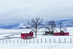 Red Barns on Rural Farm in Winter, Taconic Mountains Region, Hamlet of Ancramdale, Ancram, NY