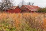 Old Red Barns in Abandoned Field, White County, Romance, AR