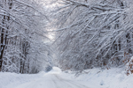 Snowy Country Road in Green Mountain National Forest, Somerset, VT