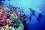 Divers visit Shinkoku Maru's marine life, Truk Lagoon, Micronesia