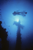 Diver ascends to surface, forward mast, Fujikawa Maru, Truck Lagoon, Micronesia