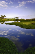 Waiokahi Pond, Kona Coast, Big Island, Hawaii
