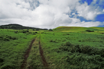 North Kohala Pasture, Big Island, Hawaii