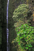 Hikers enjoy Kapaloa Falls, North Kohala, Big Island, Hawaii