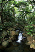 ONOMEA RAINFOREST STREAM SCENIC, HAMAKUA COAST, BIG ISLAND, HAWAII