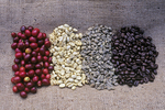 Kona Coffee production stages-cherry, parchment, green bean, roasted beans, Big Island, Hawaii