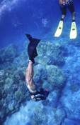 Free diver explores Honaunau Bay, Big Island, Hawaii