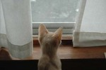F15- Kitten in window 0015