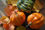 Variety of winter squashes with autumn leaves.