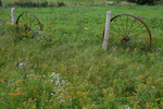 Rusted antique wagon wheels line fence in pasture w/ wildflowers, Prince Edward island, Canada.