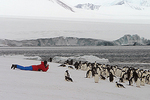 PHOTOGRAPHING ADELIE PENGUINS - TOURISM - ADVENTURE TRAVEL: BROWN BLUFF, ANTARCTICA